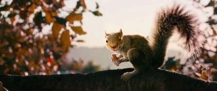 killer squirrels horror movie set to be the next sharknado