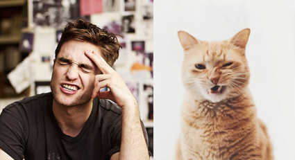 Cats impersonating fit male models and celebs including Ryan Gosling and Robert Pattinson
