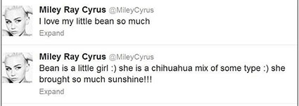 miley cyrus new dog