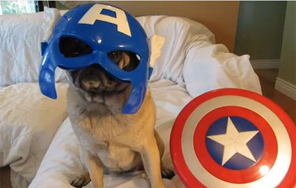 Avenger Pugs are here to save the day