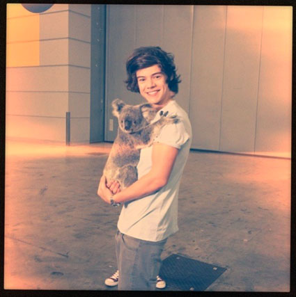 Harry Styles with a koala