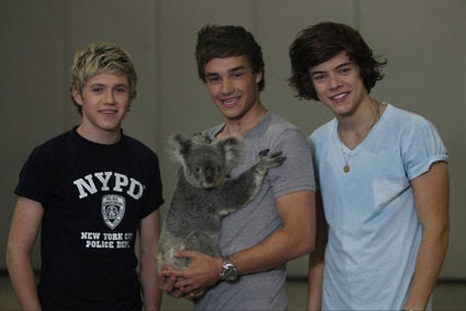 Liam, Niall and Harry with a koala