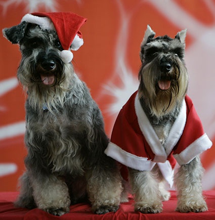 Cute Christmas animals - PICS
