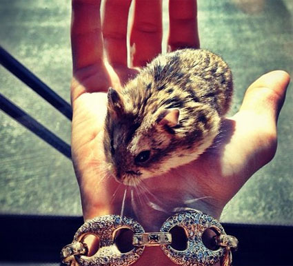 pac hamster