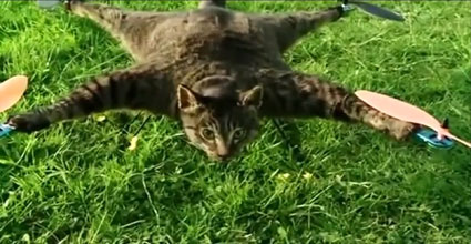 dead cat turned into remote controlled helicopter