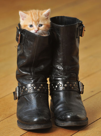 puss in boots kitten in a boot