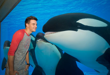 liam payne gets smoochy with a killer whale in florida   pics