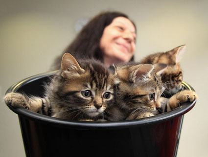 cute kittens in a bucket