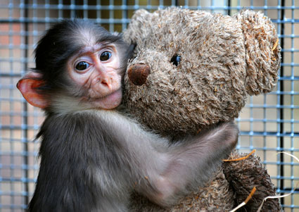 baby monkey hugging a teddy