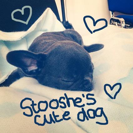 Stooshe dog